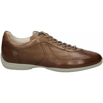 Pantofi Bărbați Pantofi Derby Santoni PEDULA 7F+INF. GOOSE PLUS e50-marrone-medio