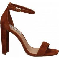 Pantofi Femei Sandale  Steve Madden FRANKY SUEDE chestnut