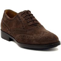 Pantofi Bărbați Pantofi Derby Marco Ferretti NEWPORT BROWN Multicolore