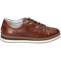 Pantofi Bărbați Pantofi sport Casual IgI&CO 3138122 Maro