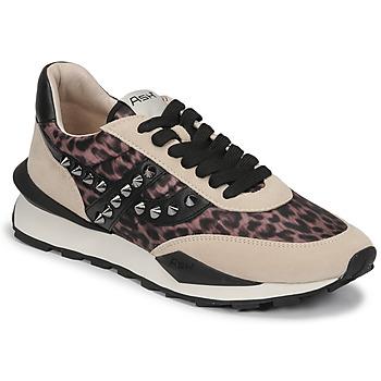 Pantofi Femei Pantofi sport Casual Ash SPIDER STUDS Bej / Negru