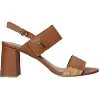 Pantofi Femei Sandale  Alviero Martini E124 587A Maro